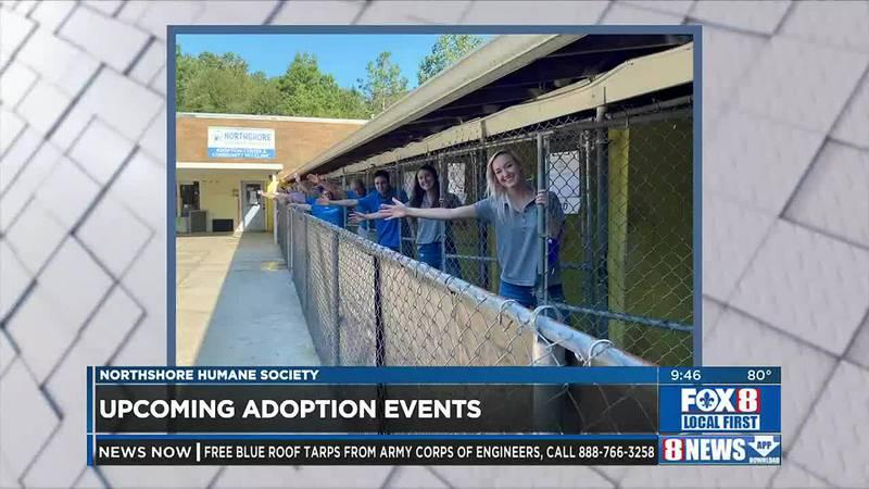 Upcoming adoption events