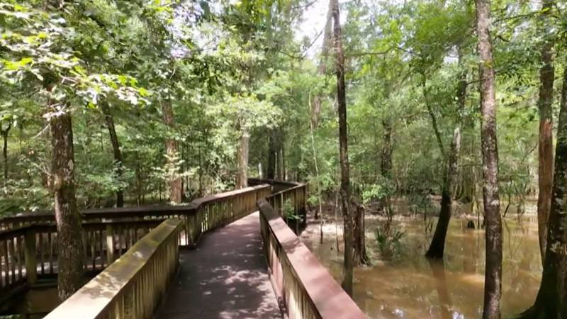 A series of hiking trails and boardwalks at Tickfaw State Park takes you through the forest and...
