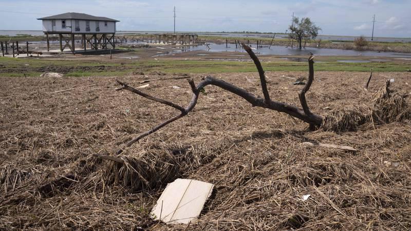 Dead marsh grass blankets an area near the levee in Golden MeadowJ