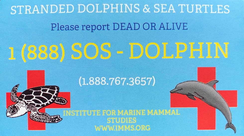 If you spot a dead dolphin at the beach, you can report it to IMMS by calling 1-888-SOS-DOLPHIN...