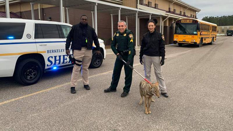 Berkeley County Sheriff's Office traffic deputies and staff members of Cane Bay Elementary...