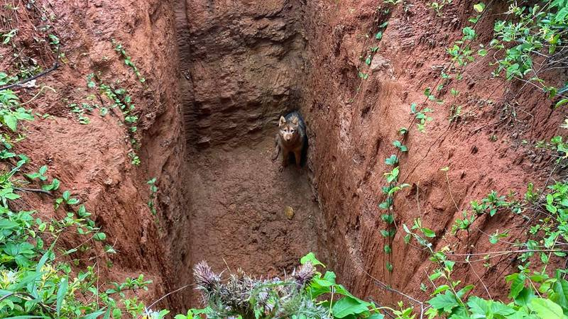 The pup was found at the bottom of a hole while a man was checking a property in metro Atlanta.