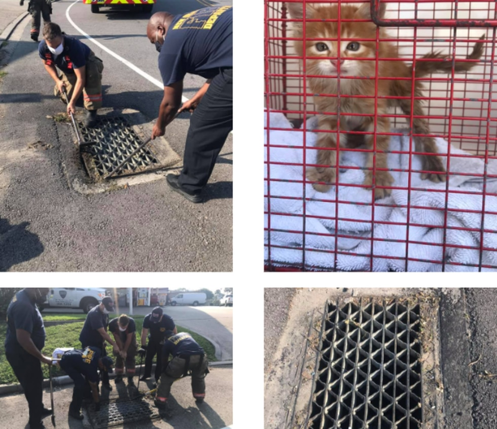 The New Orleans Fire Department lent a helping hand to the SPCA in rescuing Pennywise from a...