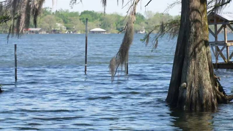 Lake Bruin is a picturesque body of water surrounded by Cypress trees.