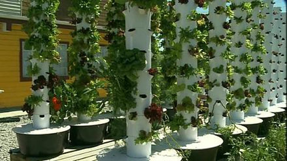 Multiple crops can be grown in the same tower