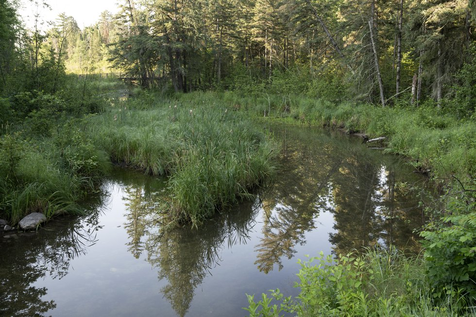 The Mississippi River, just downstream from its headwaters at Lake Itasca State Park in Minnesota