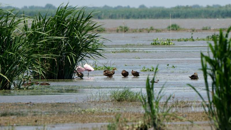 Birds gather on new land formed in Bay Denesse near the Mississippi River in Plaquemines...