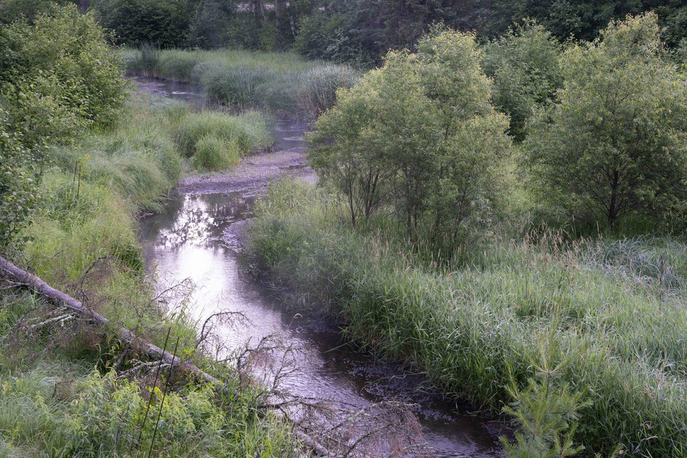 The Mississippi River, about a quarter-mile from its headwaters, appears more like a small creek.