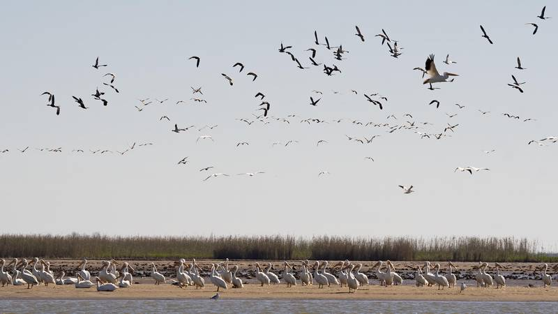 Birds take flight a sandbar that formed in the West Bay Diversion Project