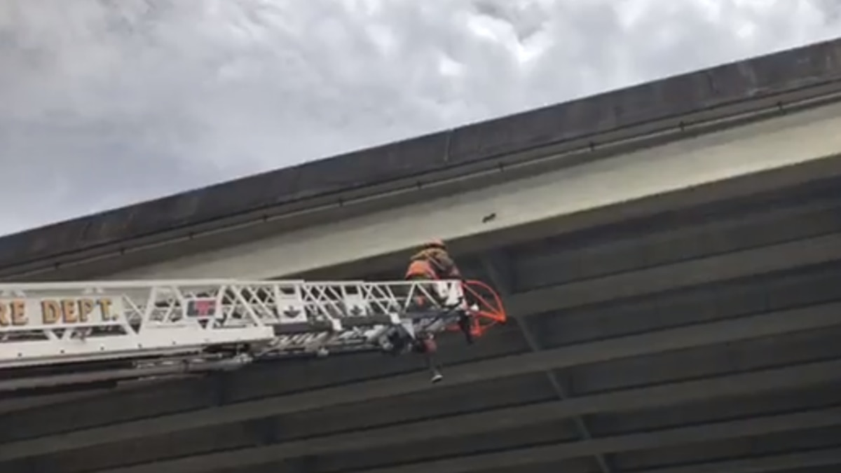 The New Orleans Fire Department is currently working to rescue a cat stuck under the Crescent...