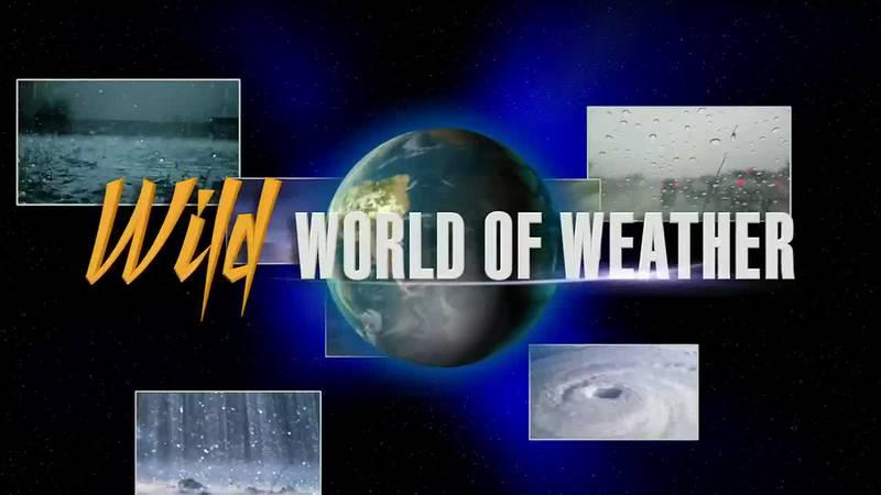 Wild World of Weather