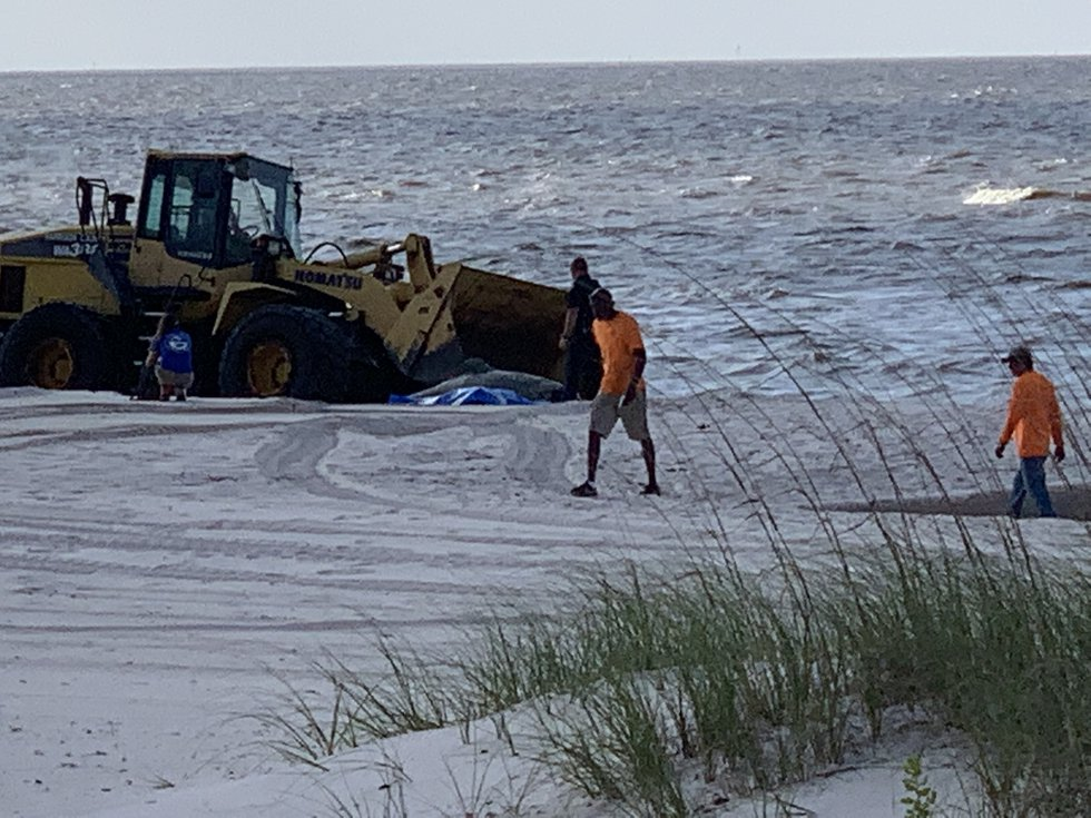 Crews from Harrison County helped IMMS remove a dead dolphin in Long Beach Tuesday morning.